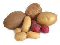 картопля різних сортів
