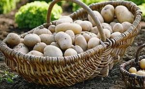 картопля в кошику