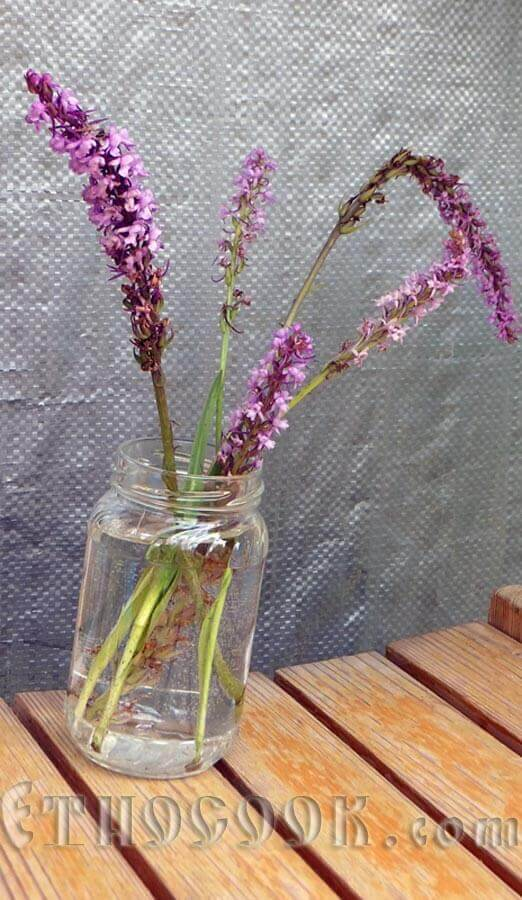 квіти зозулинця
