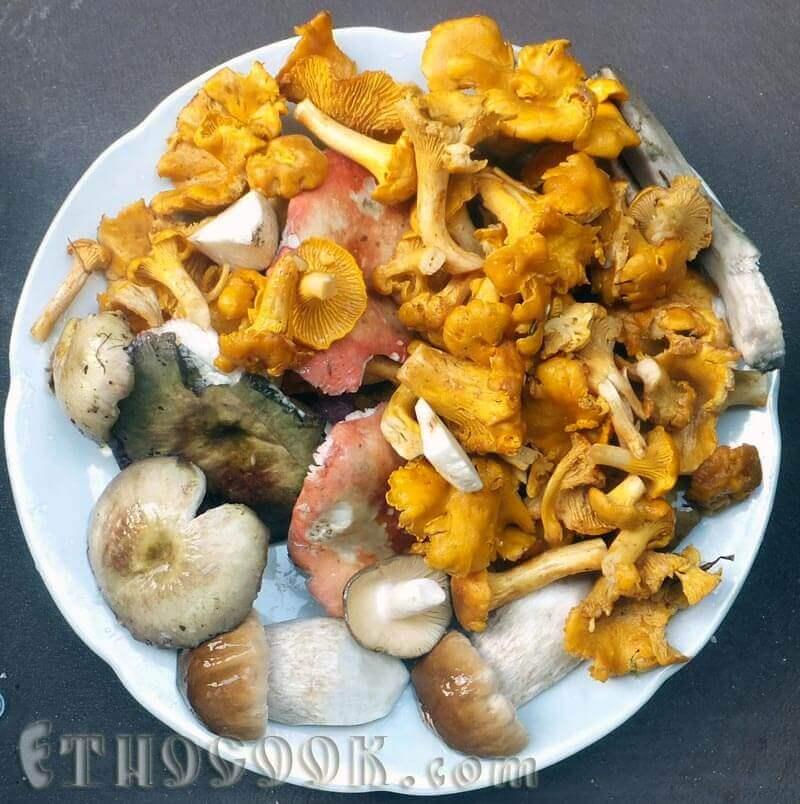 гриби на підливу