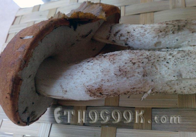 два гриби під однією шапочкою