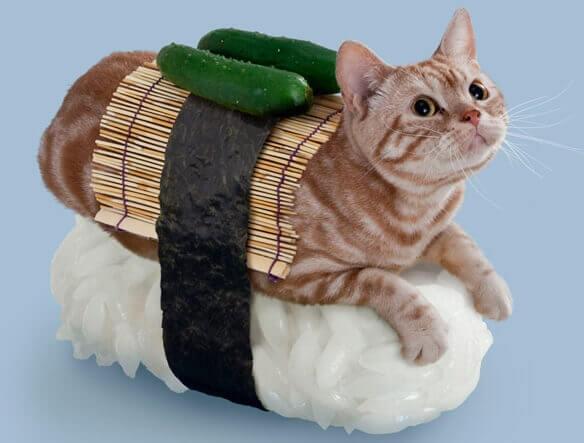 кіт-суші: не-японські суші настільки ж несподівані