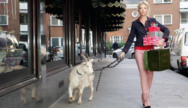 кози займають мало місця