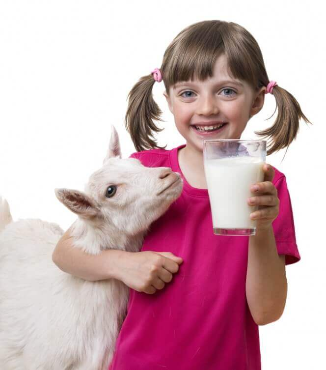 зазвичай козяче молоко не викликає алергії