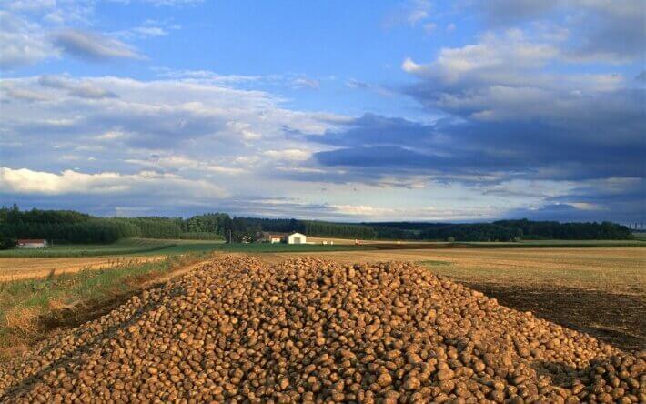 Плантація з картоплею на Хоккайдо