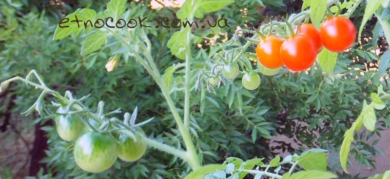 помідори балкон етнокук
